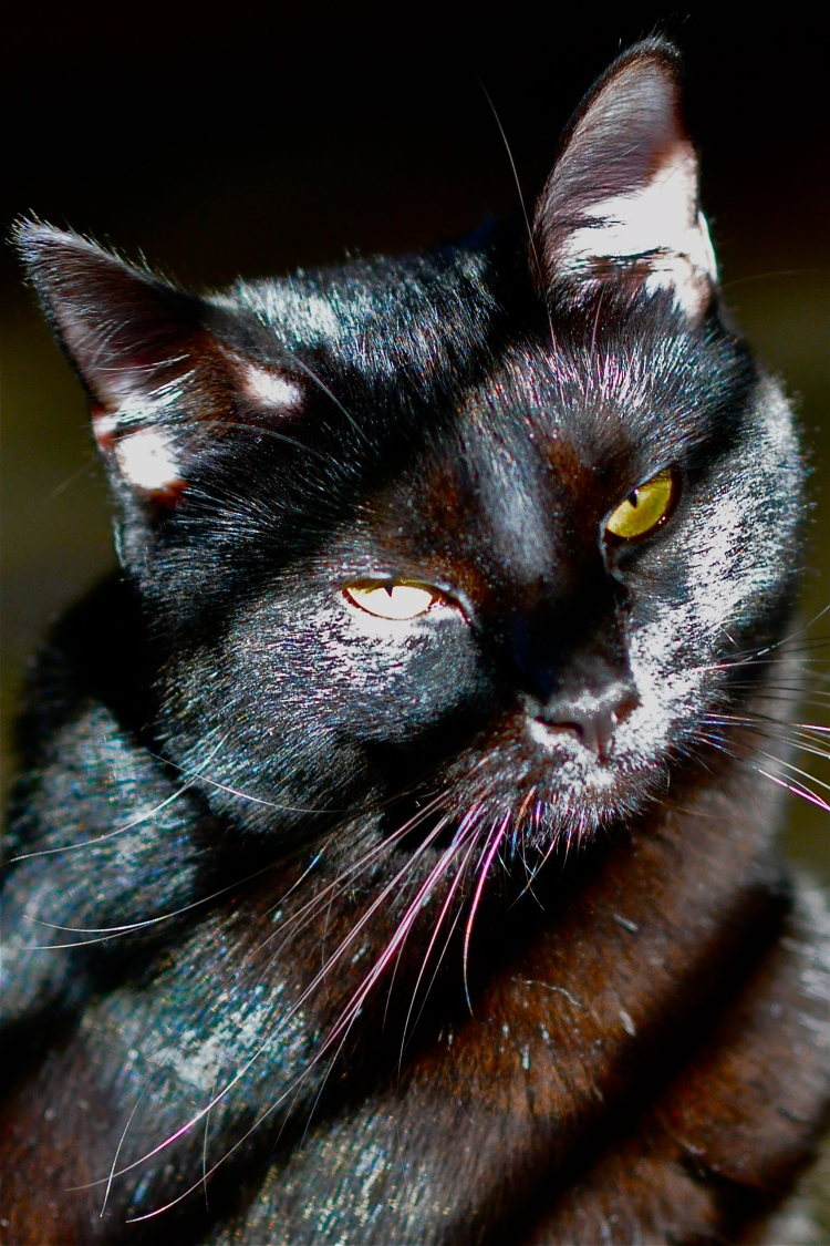 One eye in sunlight, one eye in shadow