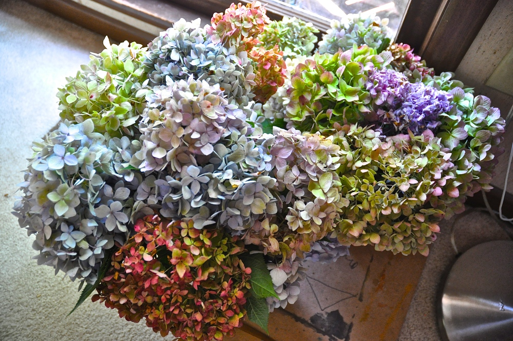 I finally figured out how to dry out my Hydrangea!!!!!