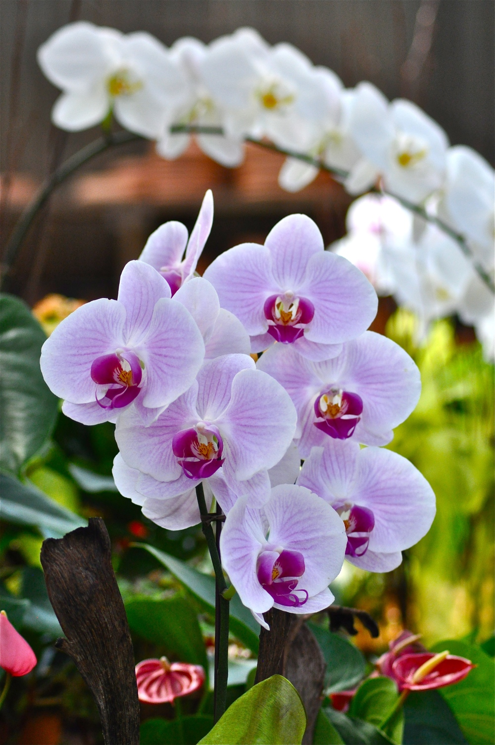 Amy, if you hate Orchids so much, why do you photograph them first?