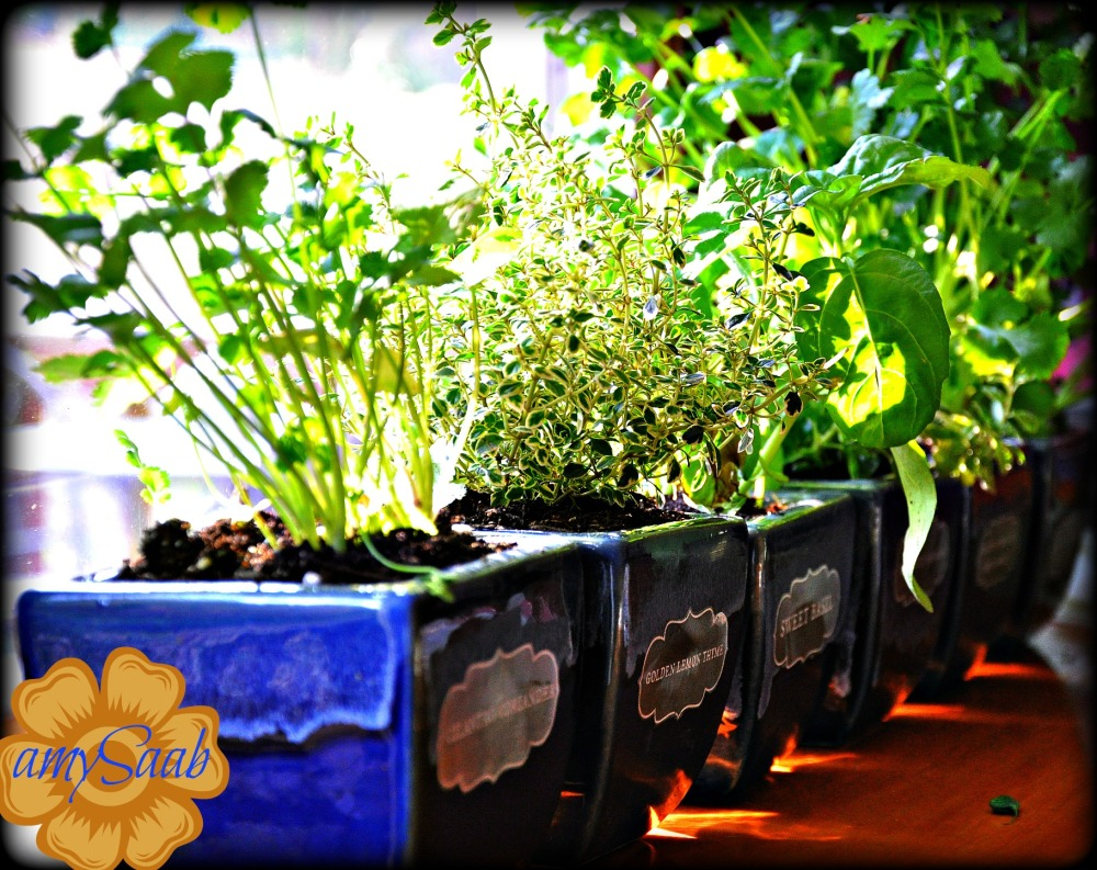 my window herb garden, its just sitting on my art desk