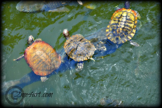 three turtles on a fish