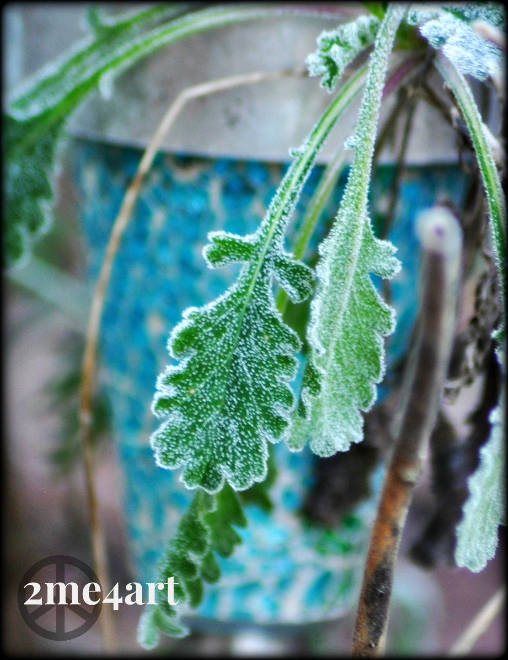 frost against blue