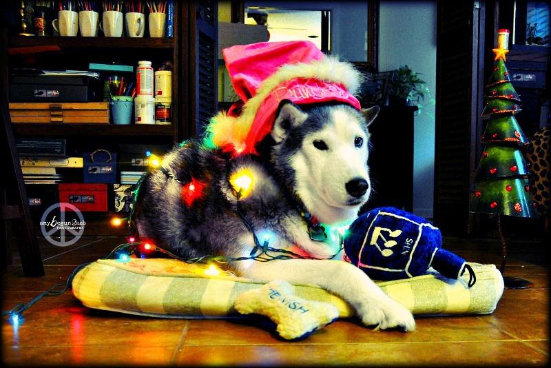 Nala ready for the holidays