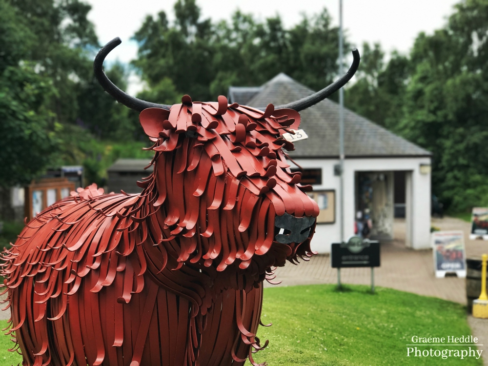 Highland Coo sculpture - Aviemore, Highlands